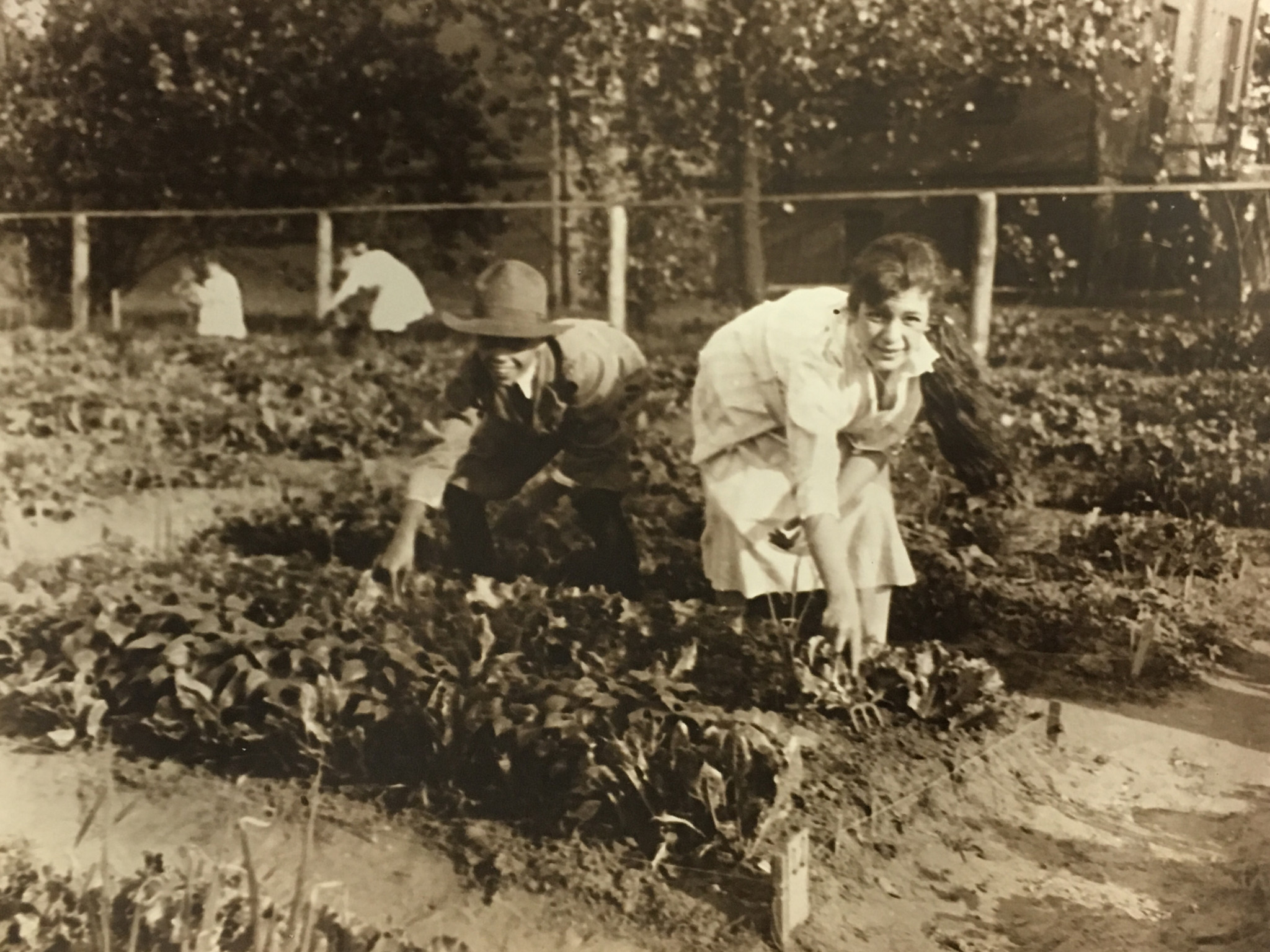 "Two young gardeners harvesting at the Railroad Mission's community Sunday School garden, July 8, 1916. The back of the original contains the following note: ""A portion of the line-up of little gardeners anticipating the receipt & consumption of ice cream cones."" (Newberry Library, Chicago, First Presbyterian Church Records, 1833-1999)"